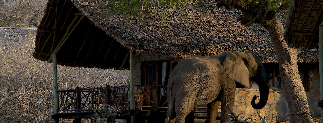 Elefant in der Ruaha River Lodge