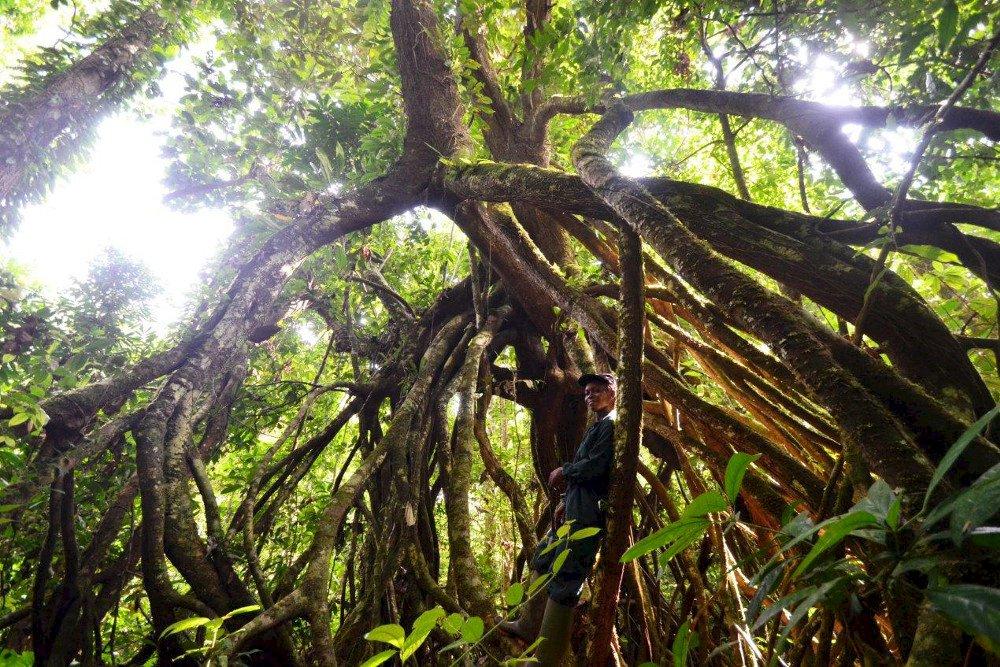 Rundreise in der elfenbeink ste zu gast im regenwald for Boden im regenwald