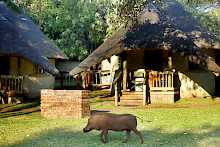 Bungalow der Chobe Safari Lodge