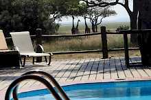 Pool der Katuma Bush Lodge